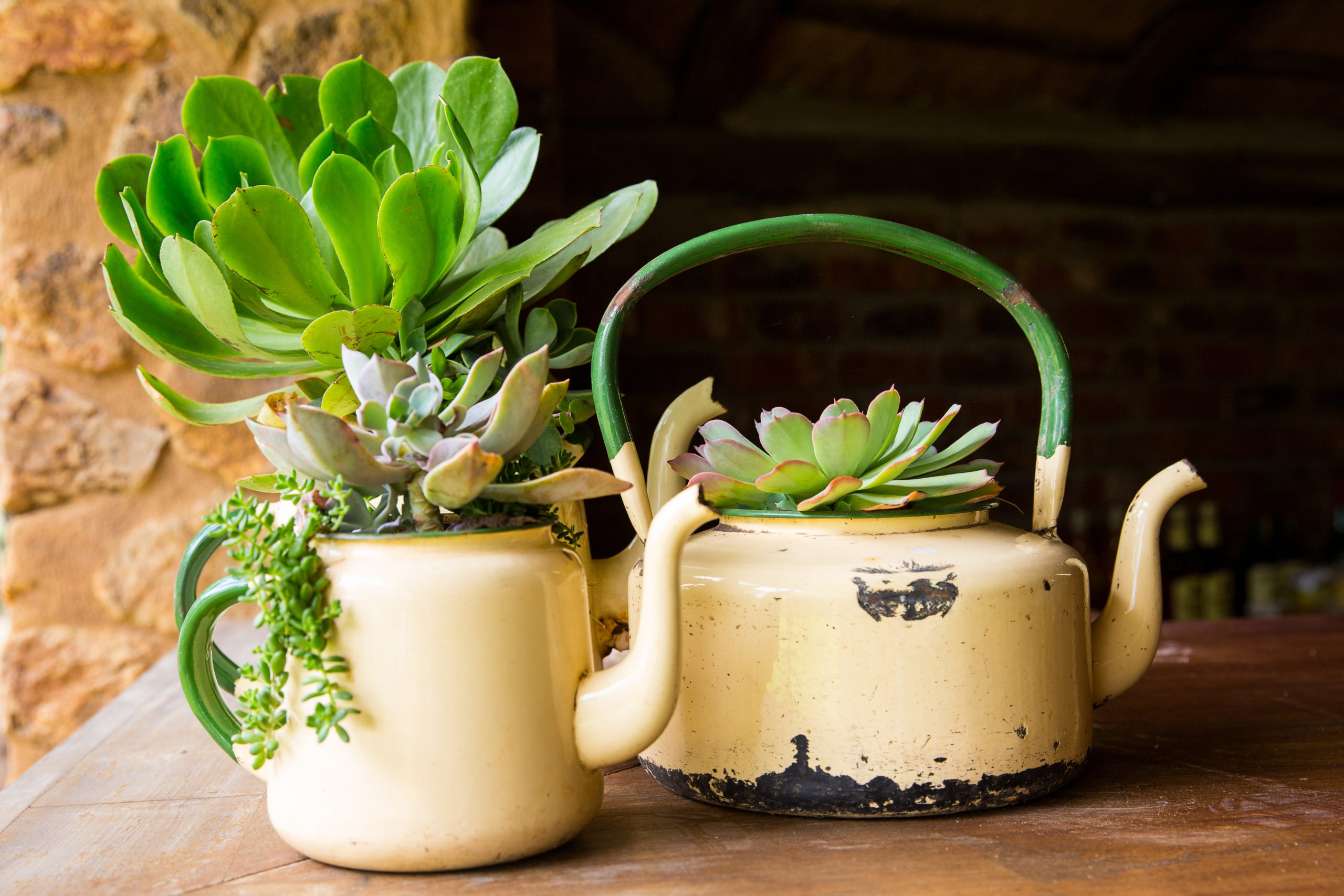 Tea kettles that have been made into flower pots